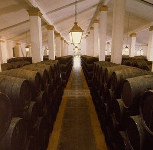 sherry barrels in a bodega