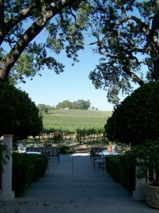 Paso Robles Vineyards 2