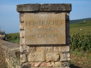 Montrachet Vineyards