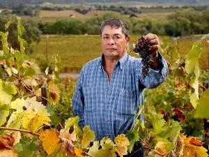 Shriveled Zinfandel grapes