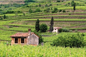 Soave Wine Region in Northeastern Italy