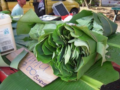 Taro leaves - they make this awesome dish called Rukau