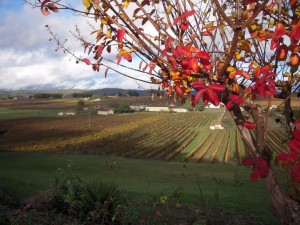 French Malbec Vineyards in Cahors, France