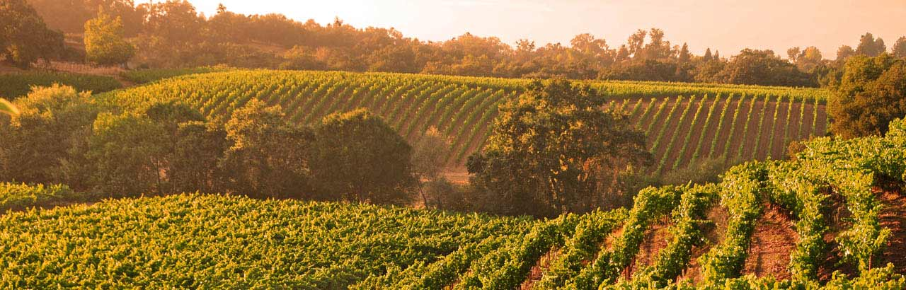 Top_10_Things_Sonoma_County_article_1280_410_0